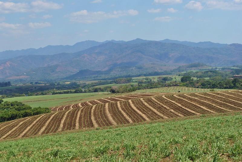 Caña de azúcar prospera en El Salvador mientras agricultura sufre