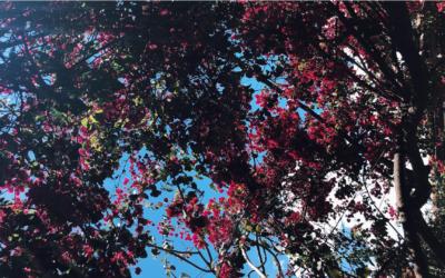 Jardín general: espacio para sembrar consuelo